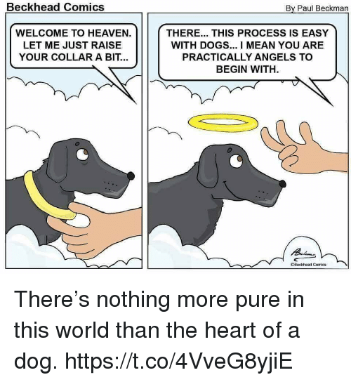 Dogs, Funny, and Heaven: Beckhead Comics  By Paul Beckman  WELCOME TO HEAVEN.  LET ME JUST RAISE  YOUR COLLAR A BIT...  THERE... THIS PROCESS IS EASY  WITH DOGS... I MEAN YOU ARE  PRACTICALLY ANGELS TO  BEGIN WITH  Beckhead Comics There's nothing more pure in this world than the heart of a dog. https://t.co/4VveG8yjiE