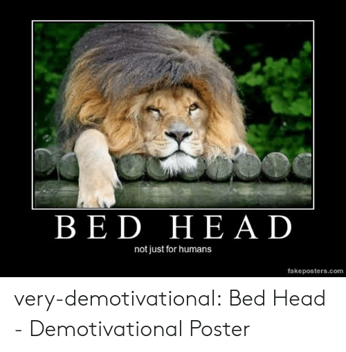 demotivational: BED HEAD  not just for humans  fakeposters.com very-demotivational:  Bed Head - Demotivational Poster