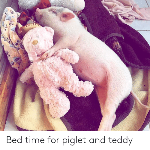 bed time: Bed time for piglet and teddy