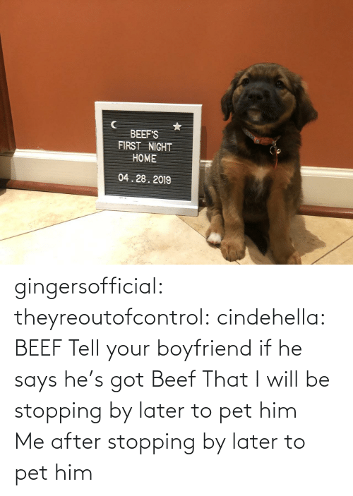 stopping: BEEF'S  FIRST NIGHT  HOME  04.28.2019 gingersofficial:  theyreoutofcontrol:  cindehella: BEEF Tell your boyfriend if he says he's got Beef That I will be stopping by later to pet him     Me after stopping by later to pet him