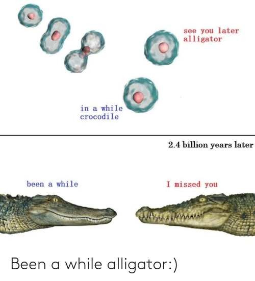 Alligator: Been a while alligator:)