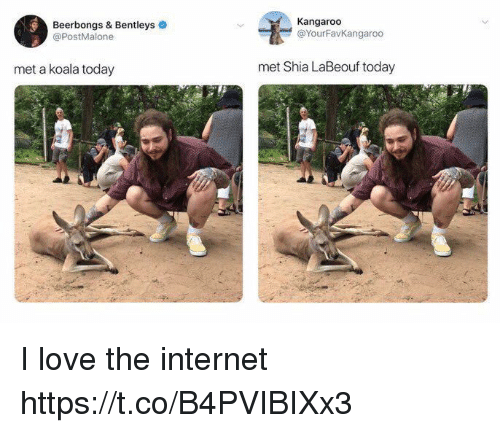 Internet, Love, and Shia LaBeouf: Beerbongs & Bentleys  @PostMalone  Kangaroo  @YourFavKangaroo  met a koala today  met Shia LaBeouf today I love the internet https://t.co/B4PVIBIXx3