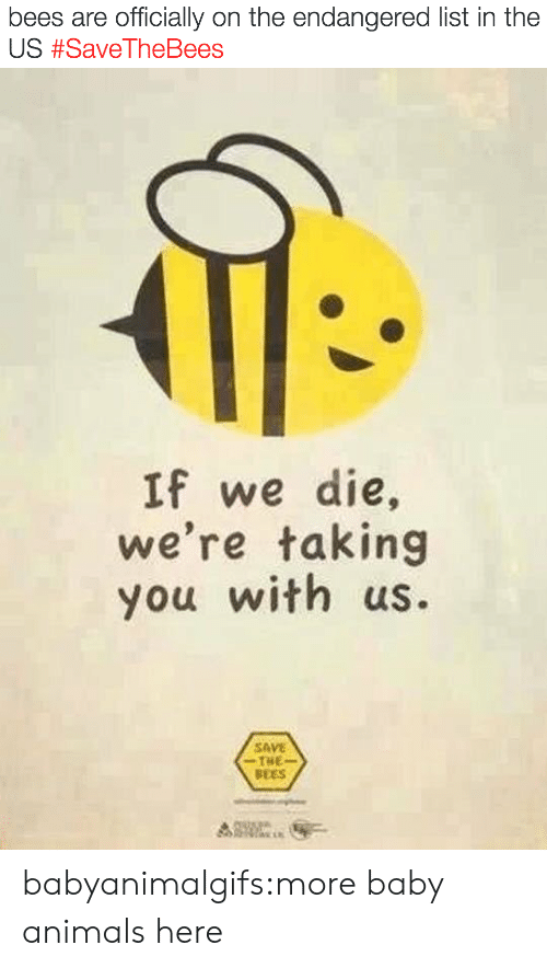 Baby Animals: bees are officially on the endangered list in the  US #SaveTheBees   If we die,  we're taking  you with us.  SAVE  THE  BEES babyanimalgifs:more baby animals here