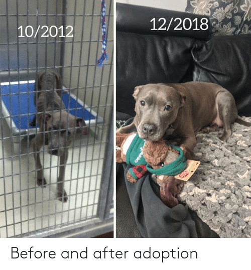 Adoption: Before and after adoption