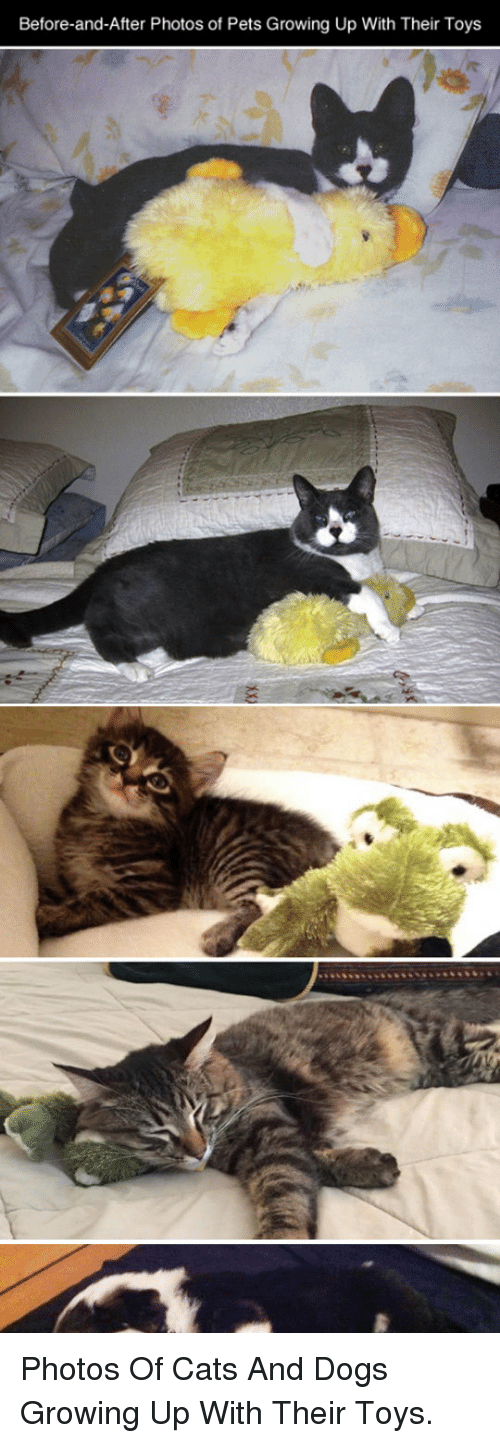 Dogs: Before-and-After Photos of Pets Growing Up With Their Toys <p>Photos Of Cats And Dogs Growing Up With Their Toys.</p>