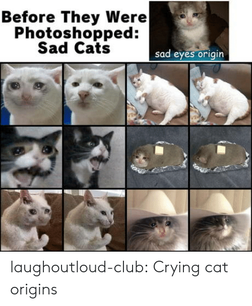 sad eyes: Before They Were  Photoshopped:  Sad Cats  sad eyes origin laughoutloud-club:  Crying cat origins