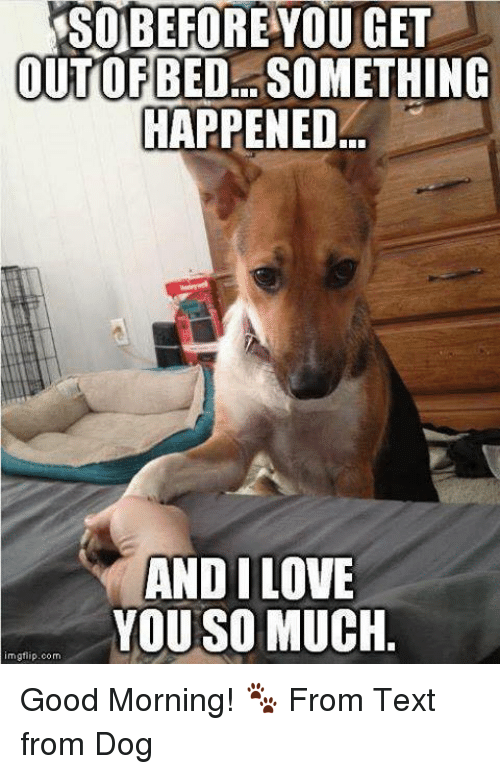 Memes, Good Morning, and Something Happened: BEFORE YOU GET  OUTOFBEDL. SOMETHING  HAPPENED  ANDI LOVE  YOU SO MUCH  mgfiip.com Good Morning! 🐾 From Text from Dog