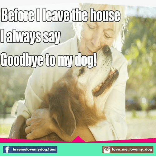 love my dogs: BeforeIleave the house  Goodbye to my  dog!  O love me love my dog  lovemelovemydog.fans