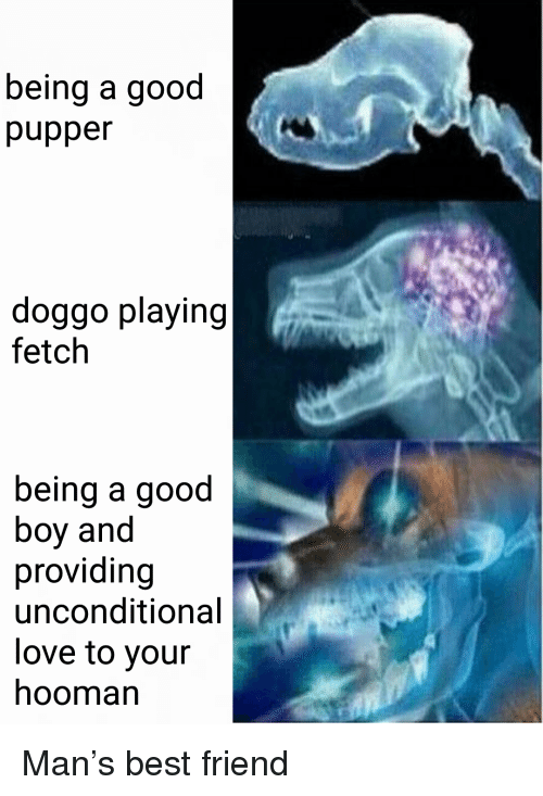 Pupper Doggo: being a good  pupper  doggo playing  fetch  being a good  boy and  providing  unconditional  love to your  hooman <p>Man&rsquo;s best friend</p>