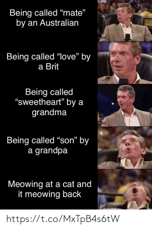 """a cat: Being called """"mate""""  by an Australian  Being called """"love"""" by  a Brit  Being called  """"sweetheart"""" by a  grandma  Being called """"son"""" by  a grandpa  Meowing at a cat and  it meowing back https://t.co/MxTpB4s6tW"""