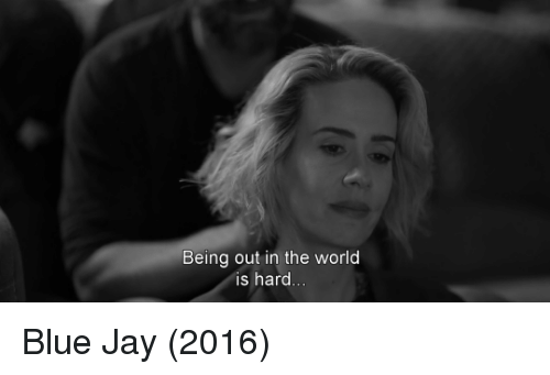 Blue Jays: Being out in the world  is hard Blue Jay (2016)