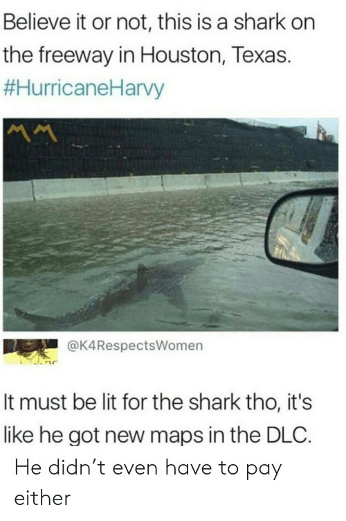 dlc: Believe it or not, this is a shark on  the freeway in Houston, Texas.  #HurricaneHarvy  MM  @K4RespectsWomen  It must be lit for the shark tho, it's  like he got new maps in the DLC. He didn't even have to pay either