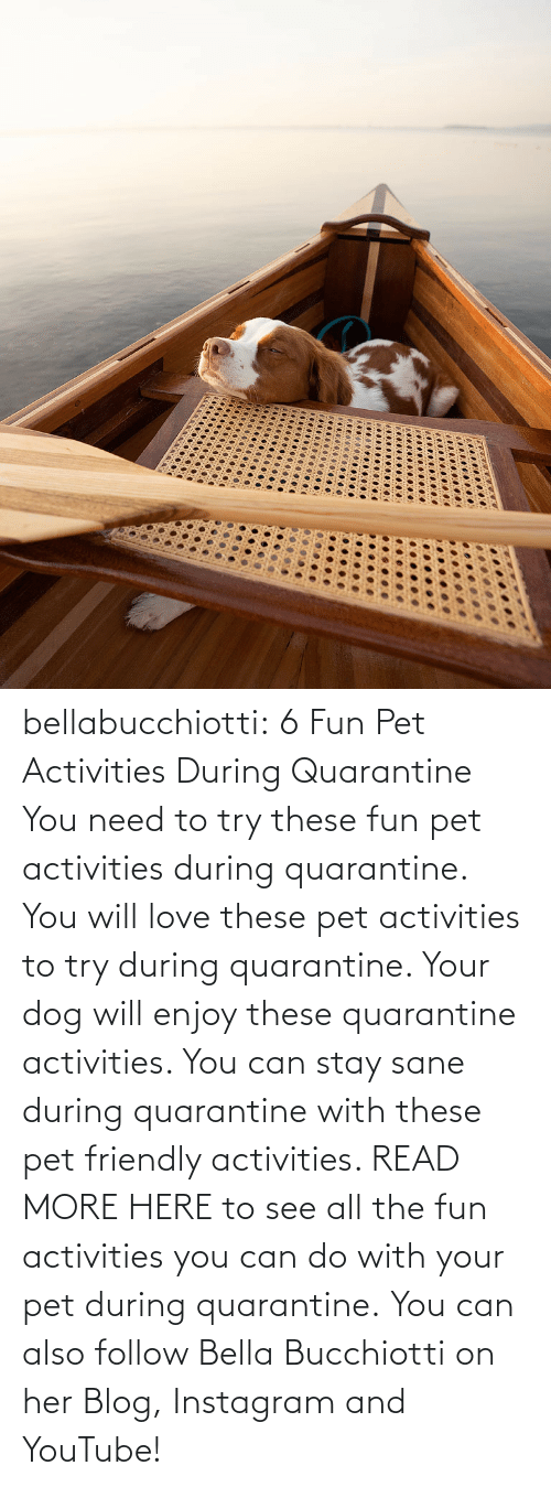 pet: bellabucchiotti:  6 Fun Pet Activities During Quarantine    You need to try  these fun pet activities during quarantine. You will love these pet  activities to try during quarantine. Your dog will enjoy these  quarantine activities. You can stay sane during quarantine with these  pet friendly activities.   READ MORE HERE to see all the fun activities you can do with your pet during quarantine.  You can also follow Bella Bucchiotti on her Blog, Instagram and YouTube!