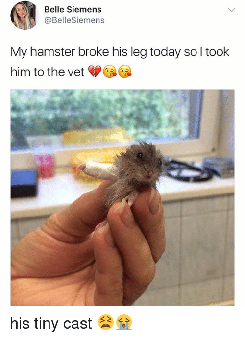 Memes, Hamster, and Today: Belle Siemens  @BelleSiemens  My hamster broke his leg today so l took  him to the vet his tiny cast 😫😭