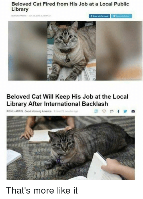 America, Memes, and Good Morning: Beloved Cat Fired from His Job at a Local Public  Library  ar  Beloved Cat Will Keep His Job at the Local  Library After International Backlash  RICKI HARRIS, Good Morning America 1hou 22 s ag That's more like it