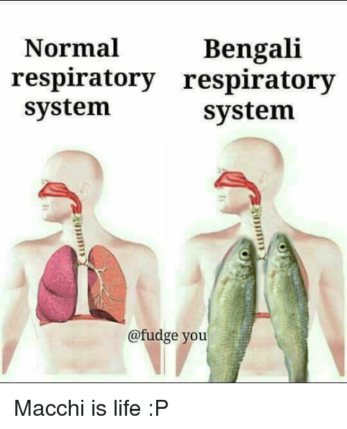 Bengali: Bengali  Normal  respiratory respiratory  system  system  @fudge you Macchi is life :P