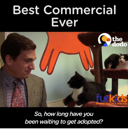 Best Commercials: Best Commercial  Ever  the  dodo  RESCUE & SHELTERS  So, how long have you  been waiting toget adopted?