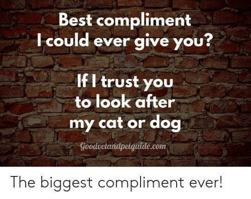 cat-or-dog: Best compliment  Icould ever give you?  If I trust you  to look after  my cat or dog  Goodvetandpelguide.com The biggest compliment ever!