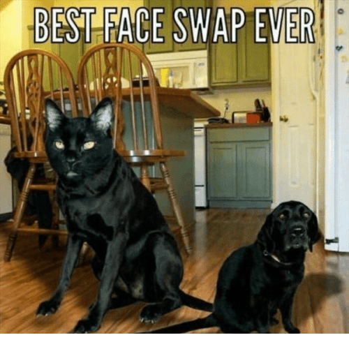 Memes, Face Swap, and Best: BEST FACE SWAP EVE