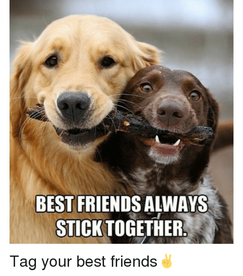 Memes, 🤖, and Sticks: BEST FRIENDS ALWAYS  STICK TOGETHER Tag your best friends✌️