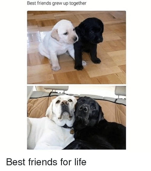 Friends, Life, and Memes: Best friends grew up together Best friends for life
