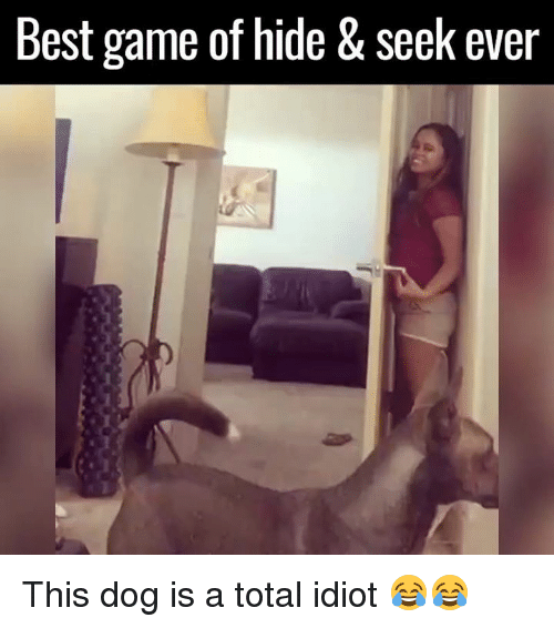 Best Gaming: Best game of hide & Seek ever This dog is a total idiot 😂😂