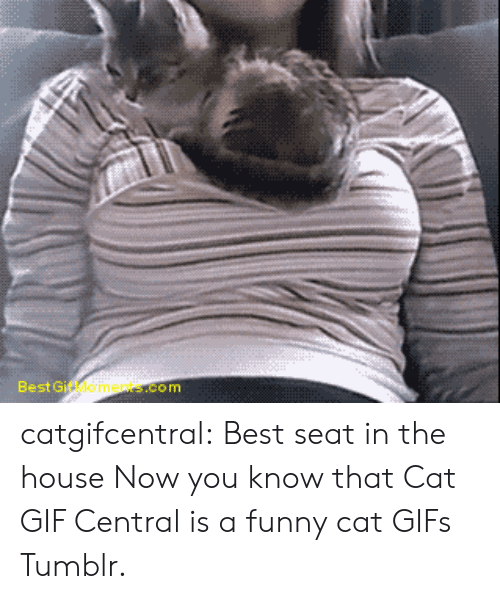 funny cat: Best Gif Moments.com catgifcentral:  Best seat in the house Now you know that Cat GIF Central is a funny cat GIFs Tumblr.
