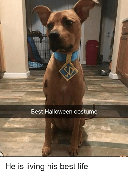 Halloween, Life, and Memes: Best Halloween costume He is living his best life