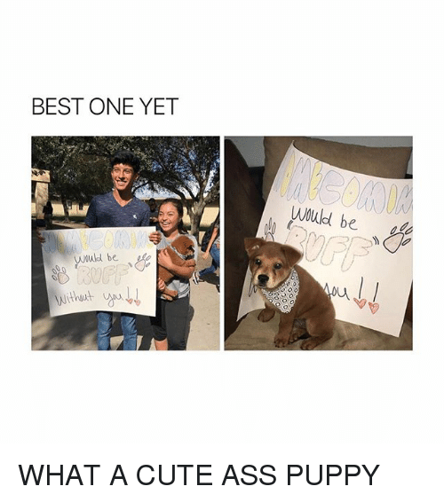 Best One Yet: BEST ONE YET  Would be  wuld be WHAT A CUTE ASS PUPPY