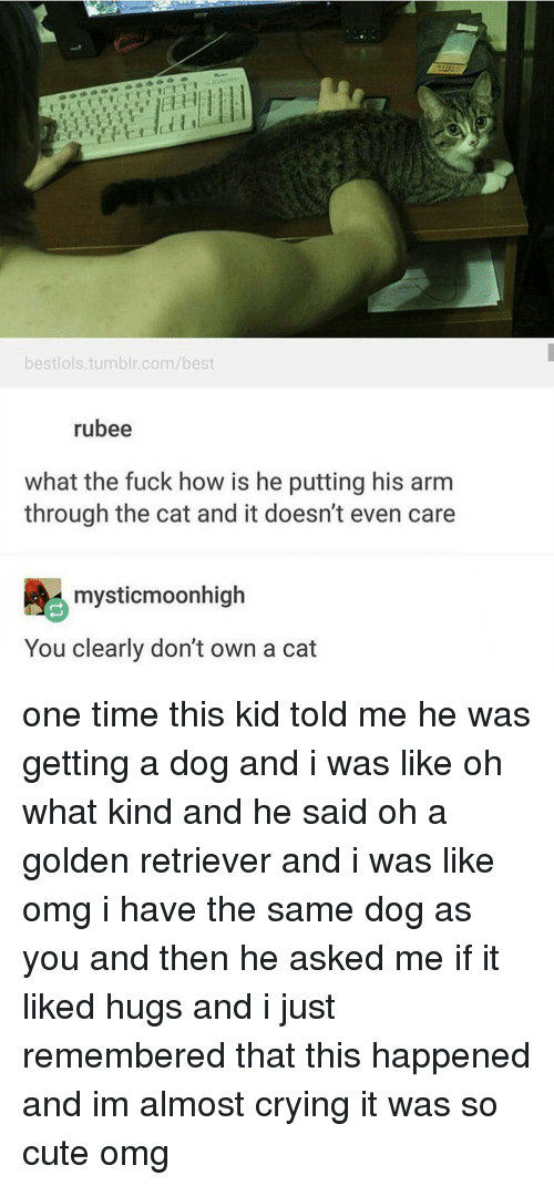 Memes, 🤖, and Arms: bestlols tumblr.com/best  rubee  what the fuck how is he putting his arm  through the cat and it doesn't even care  mysticmoonhigh  You clearly don't own a cat one time this kid told me he was getting a dog and i was like oh what kind and he said oh a golden retriever and i was like omg i have the same dog as you and then he asked me if it liked hugs and i just remembered that this happened and im almost crying it was so cute omg