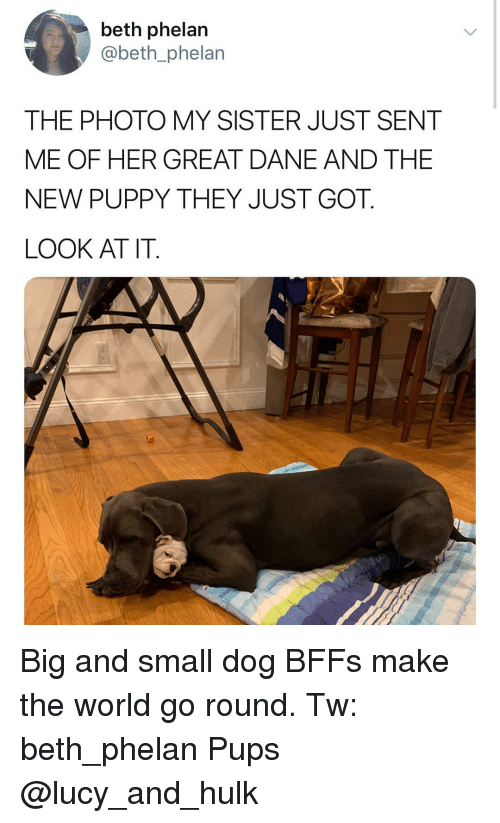 great dane: beth phelan  @beth_phelan  THE PHOTO MY SISTER JUST SENT  ME OF HER GREAT DANE AND THE  NEW PUPPY THEY JUST GOT.  LOOK AT IT. Big and small dog BFFs make the world go round. Tw: beth_phelan Pups @lucy_and_hulk
