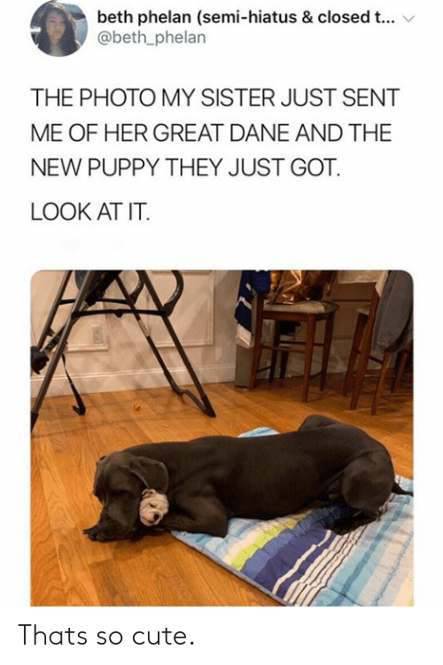 great dane: beth phelan (semi-hiatus & closed t...  @beth_phelan  THE PHOTO MY SISTER JUST SENT  ME OF HER GREAT DANE AND THE  NEW PUPPY THEY JUST GOT  LOOK AT IT. Thats so cute.
