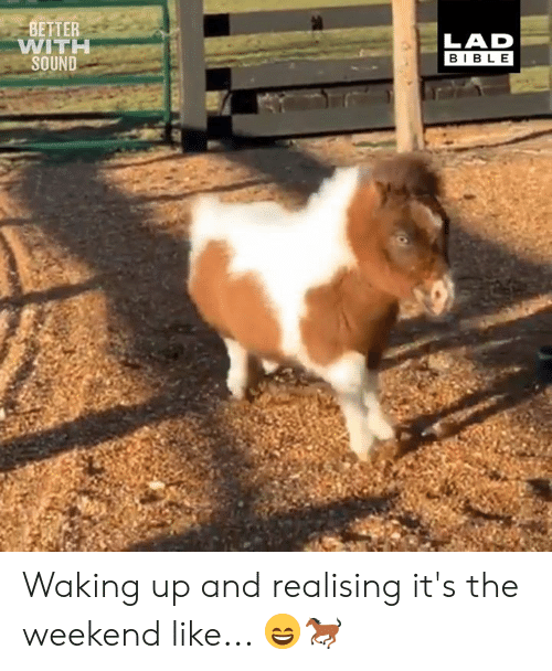 its the weekend: BETTER  WITI  SOUND  LAD  BIBL E Waking up and realising it's the weekend like... 😄🐎