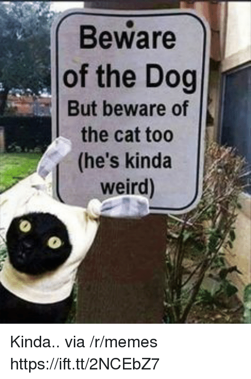 Memes, Weird, and Dog: Beware  of the Dog  But beware of  the cat to0  (he's kinda  weird) Kinda.. via /r/memes https://ift.tt/2NCEbZ7