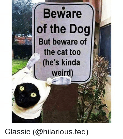 Funny, Ted, and Weird: Beware  of the Dog  But beware of  the cat too  (he's kinda  weird Classic (@hilarious.ted)
