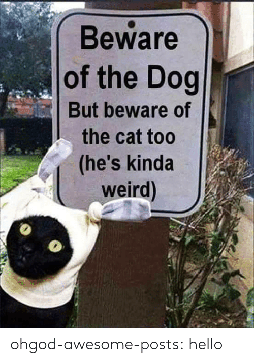 the dog: Beware  of the Dog  But beware of  the cat too  (he's kinda  weird) ohgod-awesome-posts: hello
