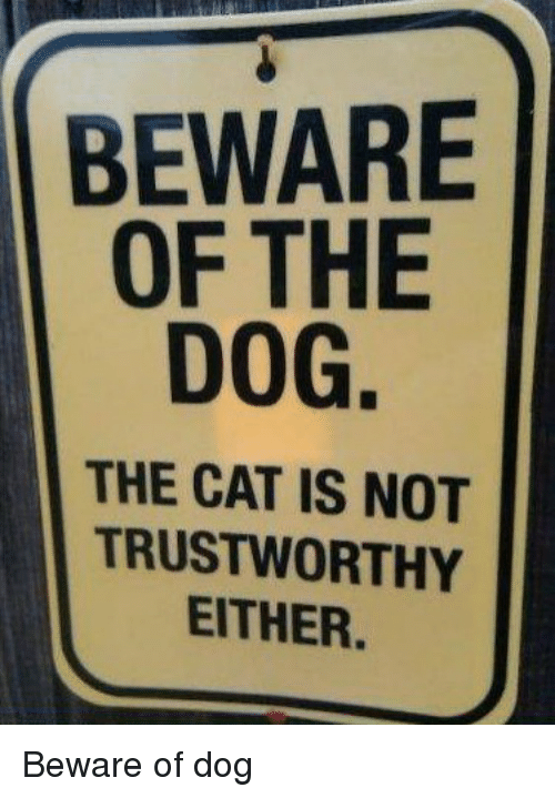 Beware Of The Dog The Cat Is Not Trustworthy Meme