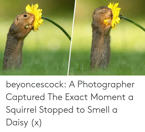 Squirrel: beyoncescock:   A Photographer Captured The Exact Moment a Squirrel Stopped to Smell a Daisy (x)