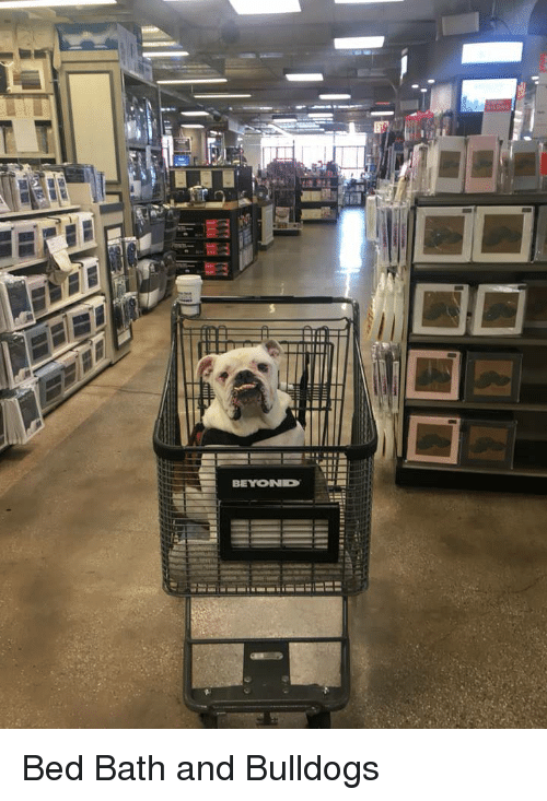 Beyond, Bath, and Bed: BEYOND Bed Bath and Bulldogs