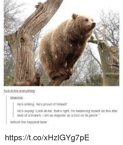 "Memes, Bear, and Proud: bhamms  He's smiling He's proud of himsei  He's saying ""Look at me, tnat's right, I'm balancing myseif on this littie  stub of a branch I am as majestic as a bird on its perch  behold the happiest bear https://t.co/xHzIGYg7pE"