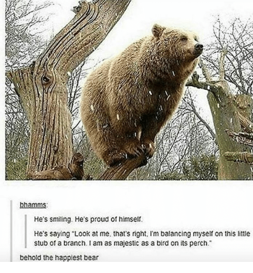 """Bear, Proud, and Looking: bhamms:  He's smiling. He's proud of himself.  He's saying """"Look at me, that's right. Im balancing myself on this little  stub of a branch. I am as majestic as a bird on its perch.  behold the happiest bear"""