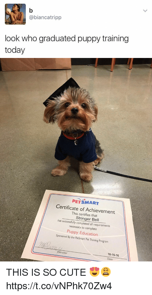 Cute, Date, and Petsmart: @bianca tripp  look who graduated puppy training  today   PETSMART  Certificate of Achievement  This certifies has successfully Stringer Bell  completed all requirements  necessary to complete  Puppy Education  Sponsored By the PetSmart Pet Training Program  Instructor  10-15-16  Date THIS IS SO CUTE 😍😩 https://t.co/vNPhk70Zw4
