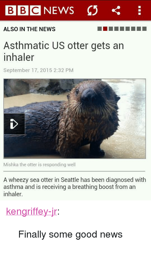 """sea otter: BIBIC  ALSO IN THE NEWS  Asthmatic US otter gets an  inhaler  September 17, 2015 2:32 PM  Mishka the otter is responding well  A wheezy sea otter in Seattle has been diagnosed with  inhaler.  sg a breathing boost fom an <p><a class=""""tumblr_blog"""" href=""""http://kengriffey-jr.tumblr.com/post/129338951638"""">kengriffey-jr</a>:</p>  <blockquote> <p>Finally some good news</p> </blockquote>                 <p></p>"""
