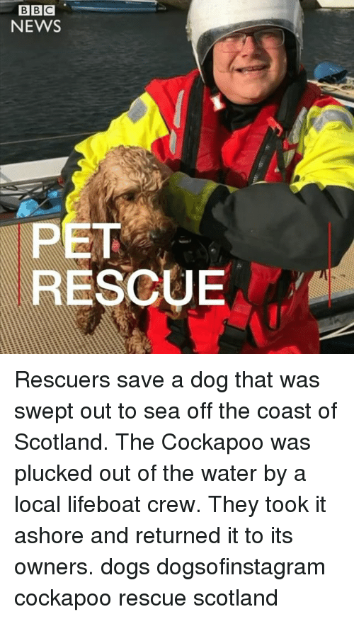 Dogs, Memes, and News: BIBIC  NEWS  PET  RESCUE Rescuers save a dog that was swept out to sea off the coast of Scotland. The Cockapoo was plucked out of the water by a local lifeboat crew. They took it ashore and returned it to its owners. dogs dogsofinstagram cockapoo rescue scotland
