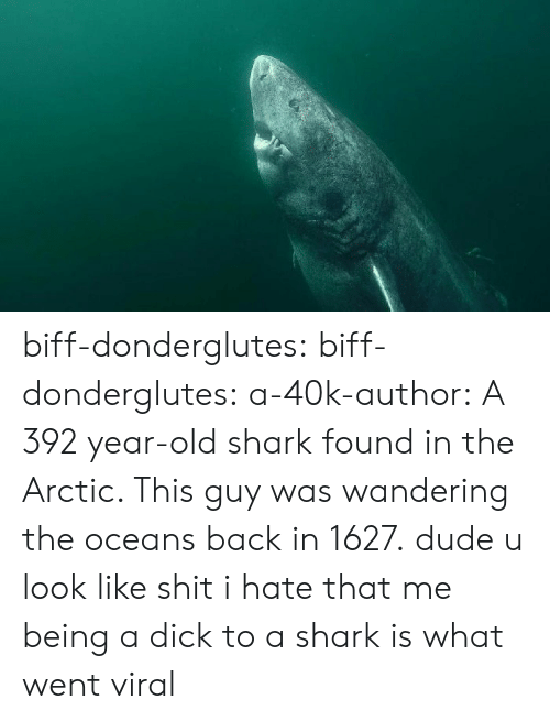 wandering: biff-donderglutes: biff-donderglutes:  a-40k-author: A 392 year-old shark found in the Arctic. This guy was wandering the oceans back in 1627. dude u look like shit  i hate that me being a dick to a shark is what went viral