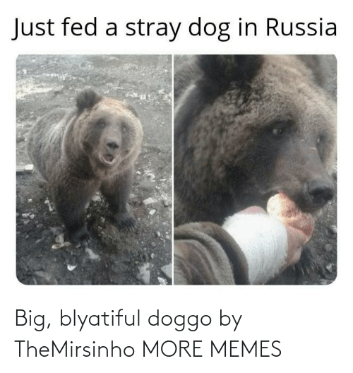 doggo: Big, blyatiful doggo by TheMirsinho MORE MEMES