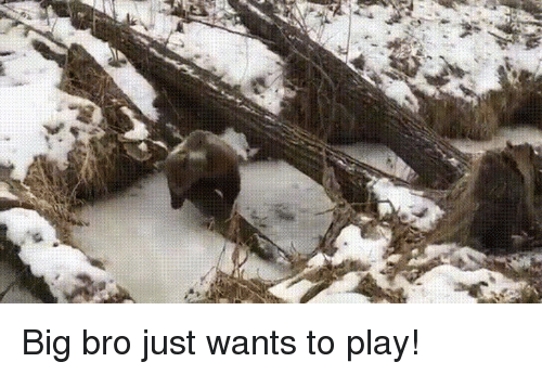 Frozen, Bear, and Big: Big bro just wants to play!