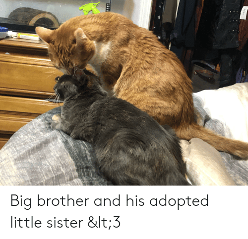 Big Brother And His Adopted Little Sister Lt3 Big Brother