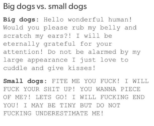 Dank, Dogs, and Fucking: Big dogs vs. small dogs  Big dogs: Hello wonderful human  Would you please rub my belly and  scratch my ears? I will be  eternally grateful for your  attention Do not be alarmed by my  large appearance I just love to  cuddle and give kisses  Small dogs  FITE ME YOU FUCK I WILL  FUCK YOUR SHIT UP YOU WANNA PIECE  OF ME LETS GO I WILL FUCKING END  YOU! I MAY BE TINY BUT DO NOT  FUCKING UNDERESTIMATE ME!