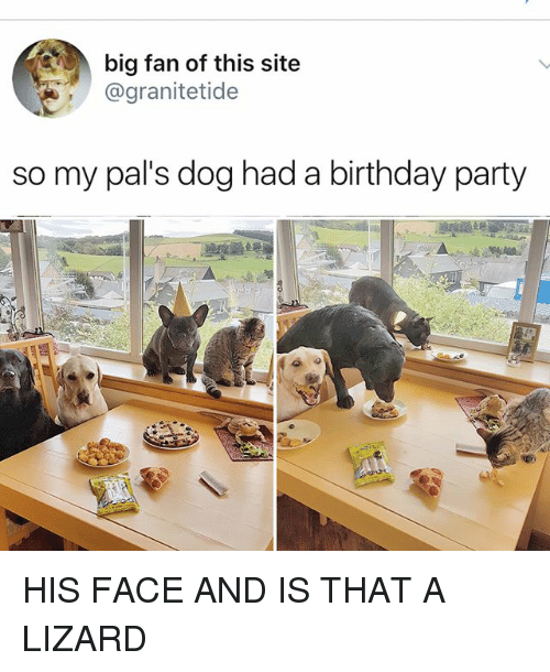 fanning: big fan of this site  @granitetide  so my pal's dog had a birthday party HIS FACE AND IS THAT A LIZARD